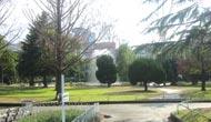 マンション近くの公園