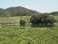 薩摩池の向こうの里山の緑が美しい