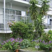 マンション内の植栽スペース