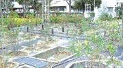 マンション敷地内のバラ園。開花時期はバラでいっぱいに
