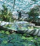 草津市立水生植物公園みずの森のハス