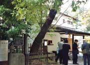 白州正子、次郎が60年余り暮らした旧白州邸『武相荘』