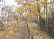 玉川上水沿いの散歩道
