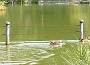 善福寺公園の池