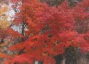 逆瀬台4丁目公園の紅葉