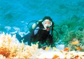 紅海にてダイビング