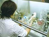大分大学での実験の様子。がん細胞の培養