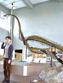 穂別博物館(北海道勇払郡むかわ町)に展示されている首長竜。「ホッピー」という愛称が付けられており、穂別で発掘された白亜紀の化石に基づいて復元骨格が作られている