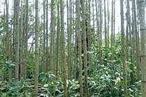 整備後の美しい竹林