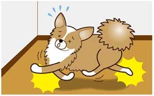 床で転ぶ犬