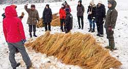準備された膨大な量の藁