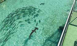 屋外の25メートルプールにはサメなどの魚たちが泳ぐ