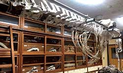 理科準備室の棚には、室戸の海の生き物たちの骨格標本が展示されている