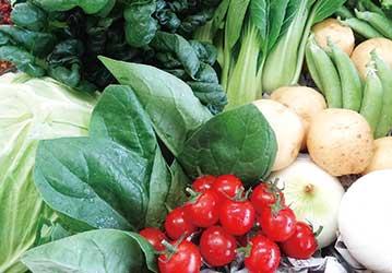 静岡産の野菜セット